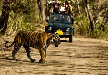 Adventure Safari Trip in India