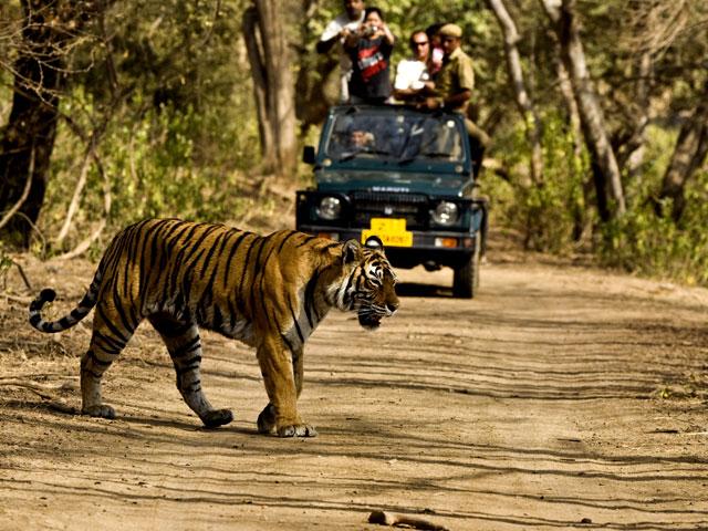 Adventure Safari Trip in India